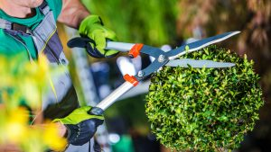 Hedge cutting Torquay