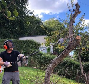 Picture of Joe Tree pruning in and around the Torquay area