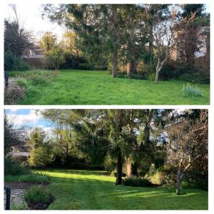 Picture of Garden services in and around Torquay