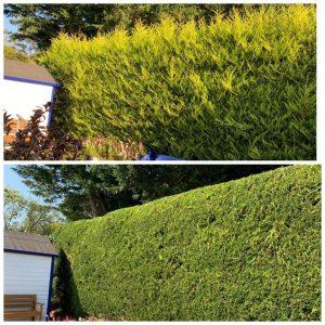 Hedge Trimming Torquay